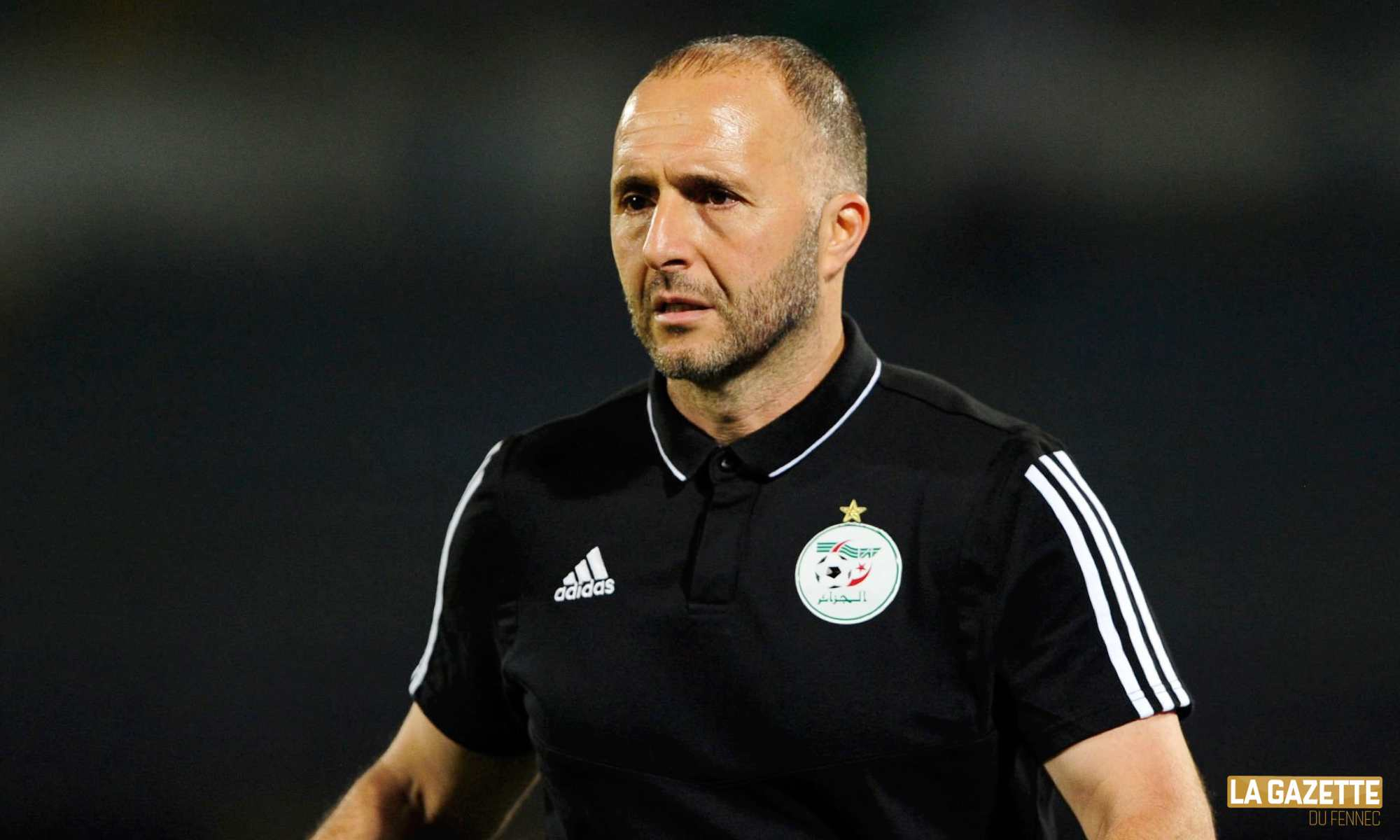 djamel belmadi black can 2019 coach