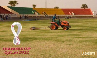 stade afrique gazon