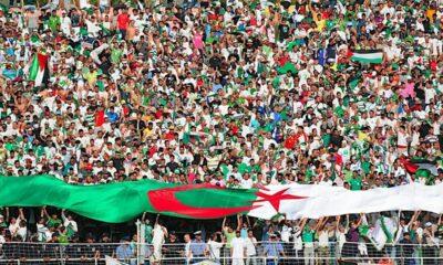 public algérien stade dz